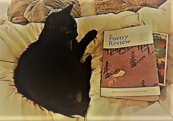 cat and poetry