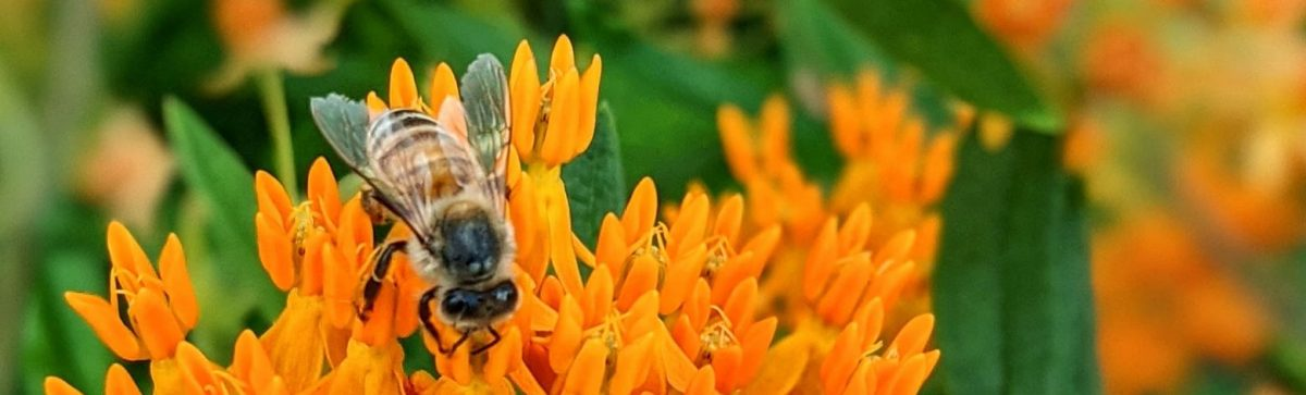 Wood Bee Poet